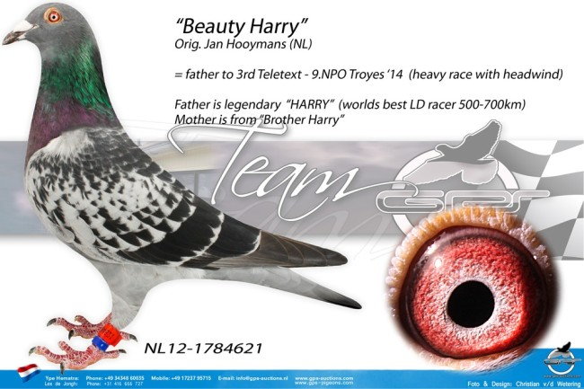 Beauty-Harry d