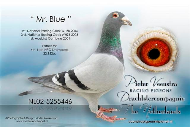 Mr Blue 02-446 (Small)